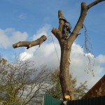 Спил дерева частями