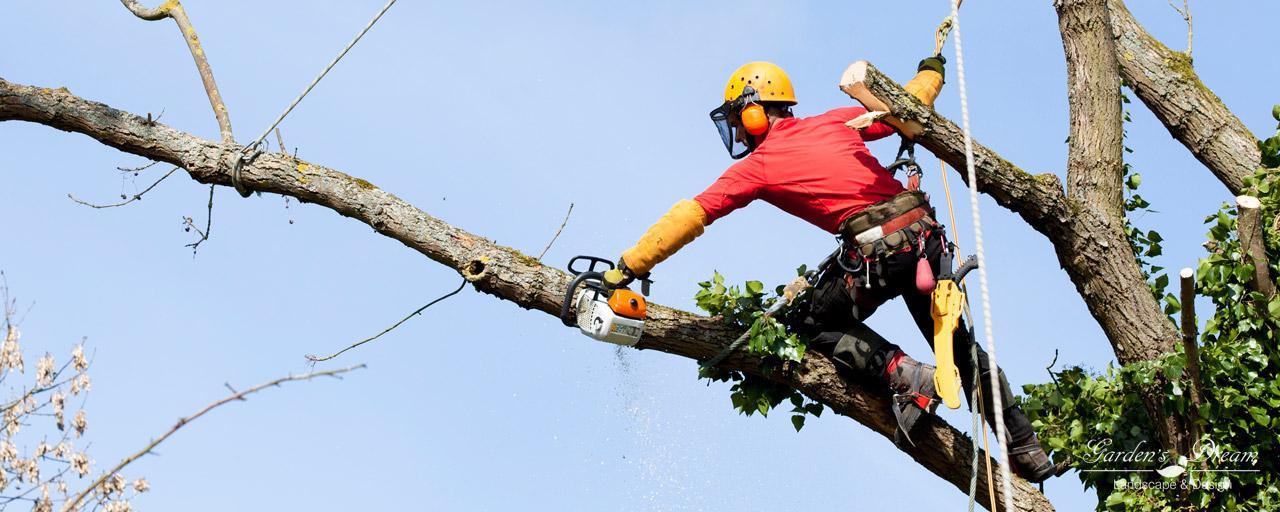 Кронирование и обрезка деревьев