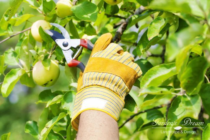 Обрезка кроны яблони