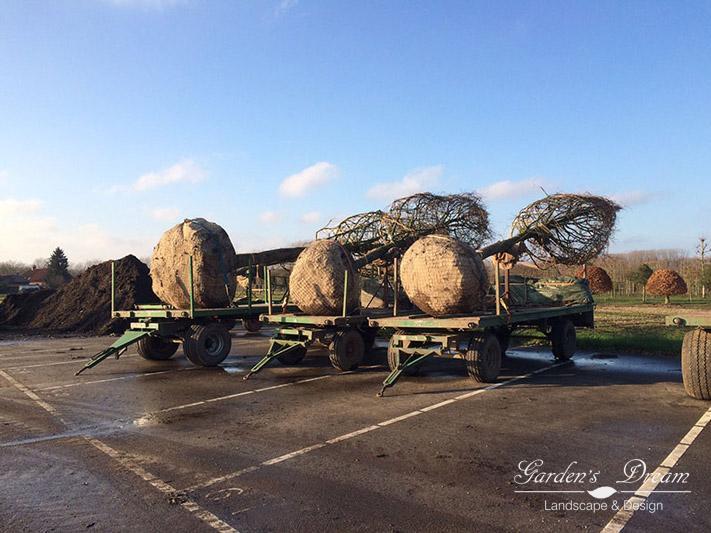 Доставка деревьев из Европы