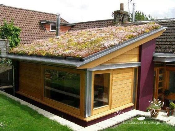 Растения на крыше