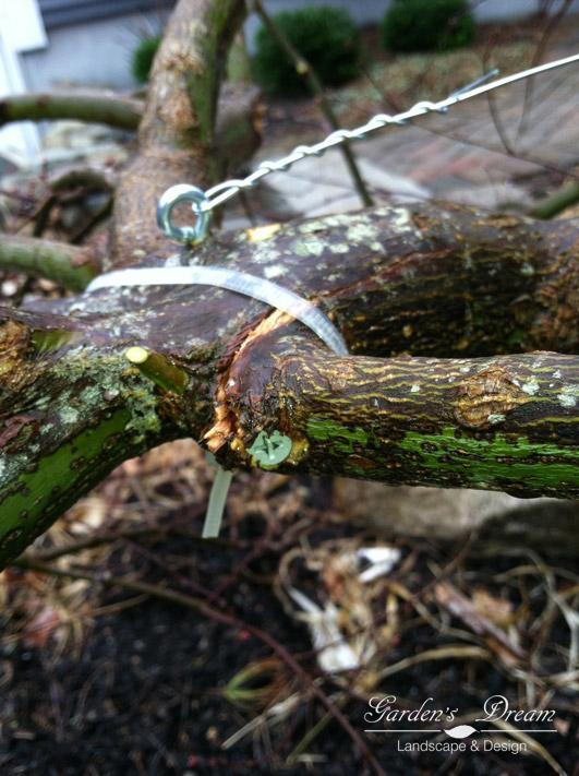 Укрепление аварийного дерева